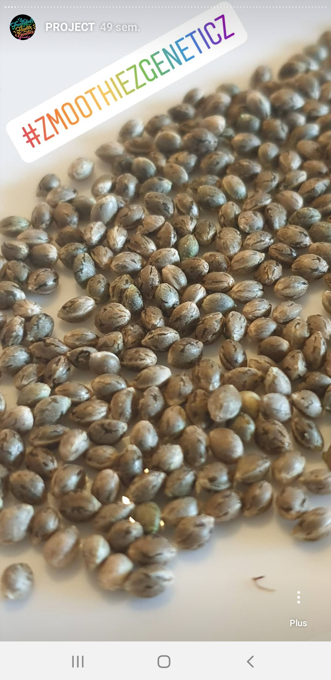 seeds zmoothiez