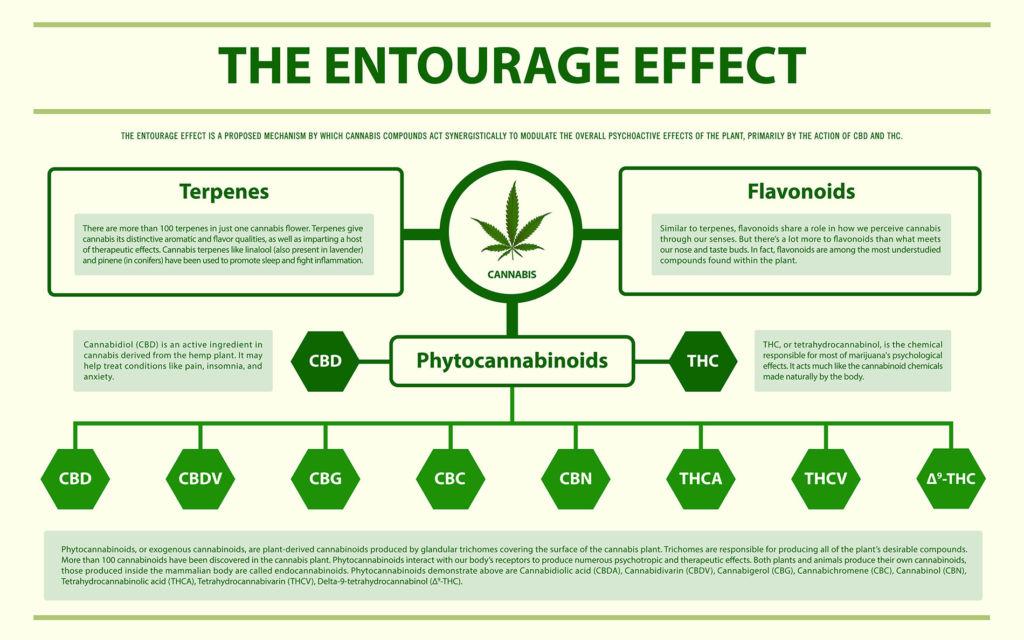 Infographie horizontale sur l'Effet d'Entourage à propos du cannabis comme vecteur de médecine alternative et de thérapie chimique, de soins de santé et de science médicale.